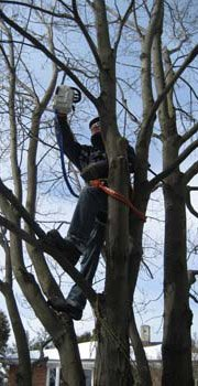 Professional Tree Services - Tree pruning and trimming
