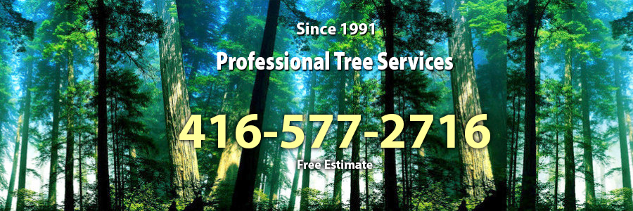 Professional Tree Services - North York, Toronto, GTA